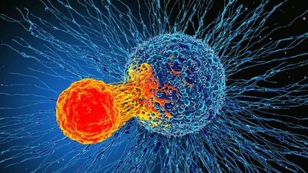 _110580947_f0192831-cancer_cell_and_t_cell_illustration-spl.jpg