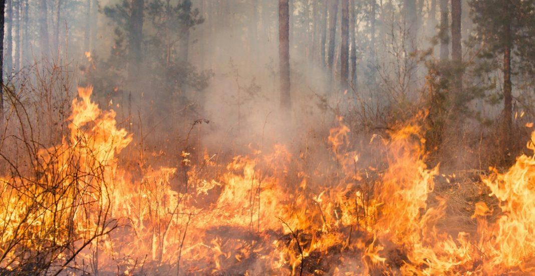 blaze in calofornia