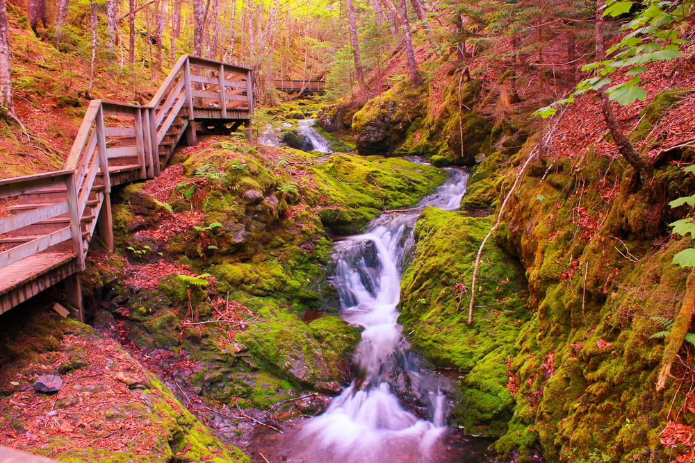 Fundy National Park (View_Point/Shutterstock)