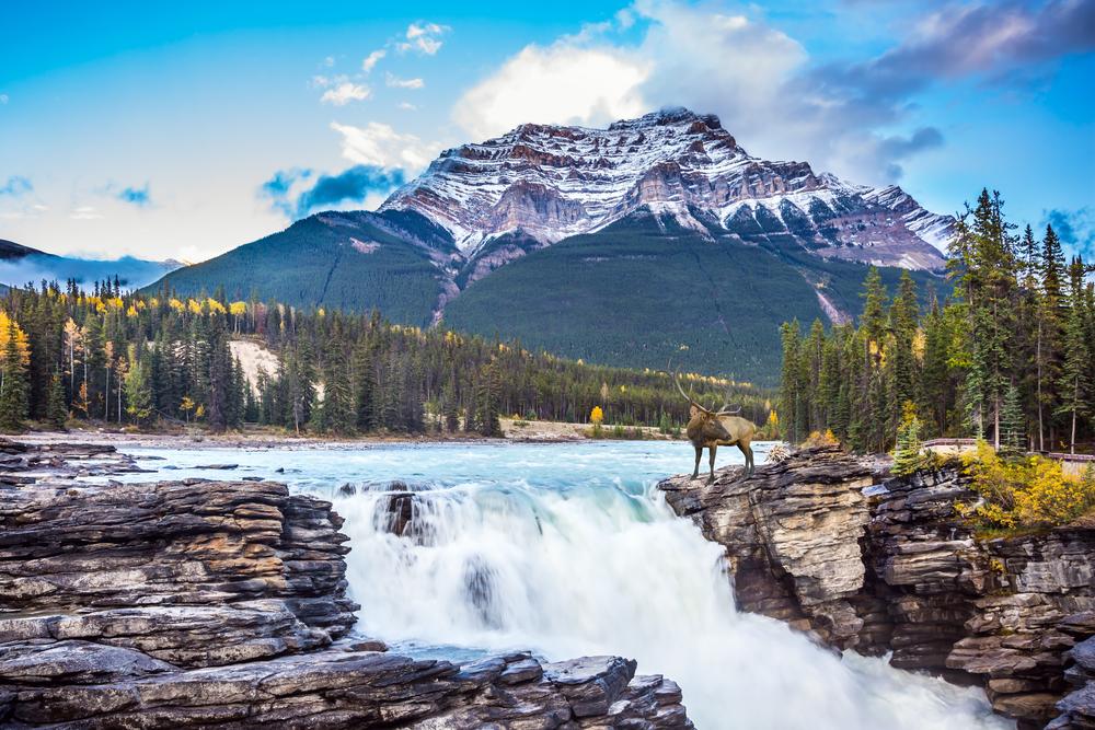 Jasper National Park (kavram/Shutterstock)